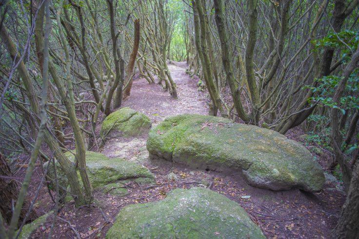 遠見山の岩3