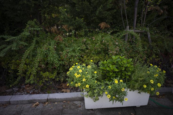 京都水族館前の花