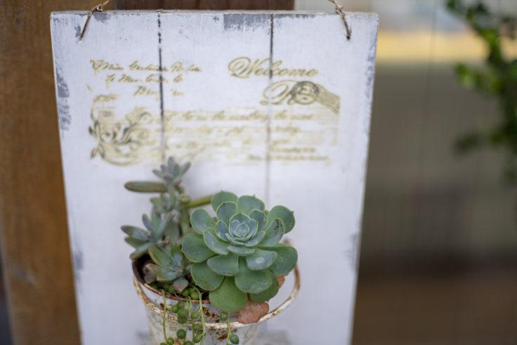 イタリアンジェラートドルチェさんの植物
