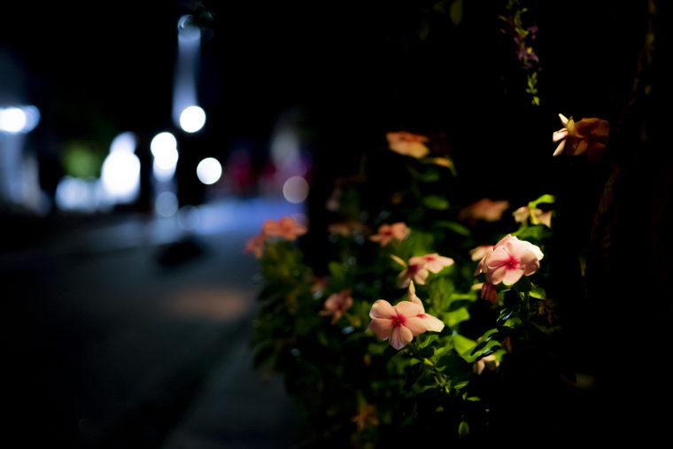 むれ源平石あかりロードの花3