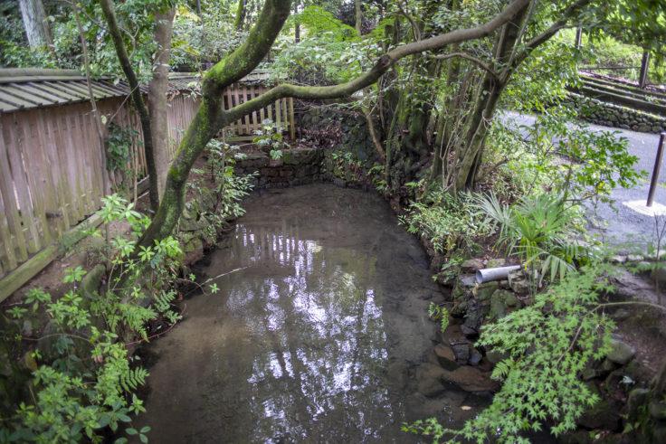 宇治上神社の入り口前の池