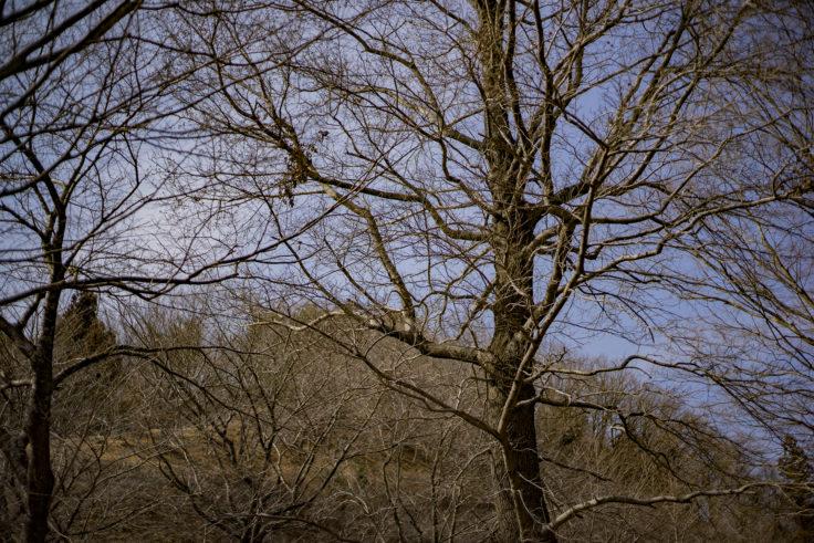 イルローザの森