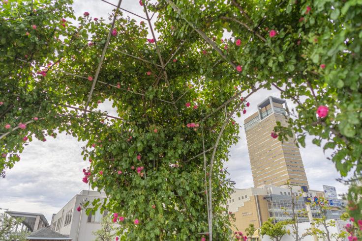 サンポートばら園のアーチとシンボルタワー