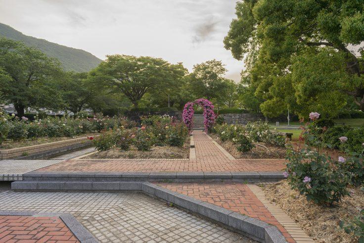 亀水バラ園3