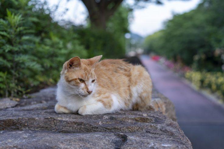 亀水バラ園のネコ