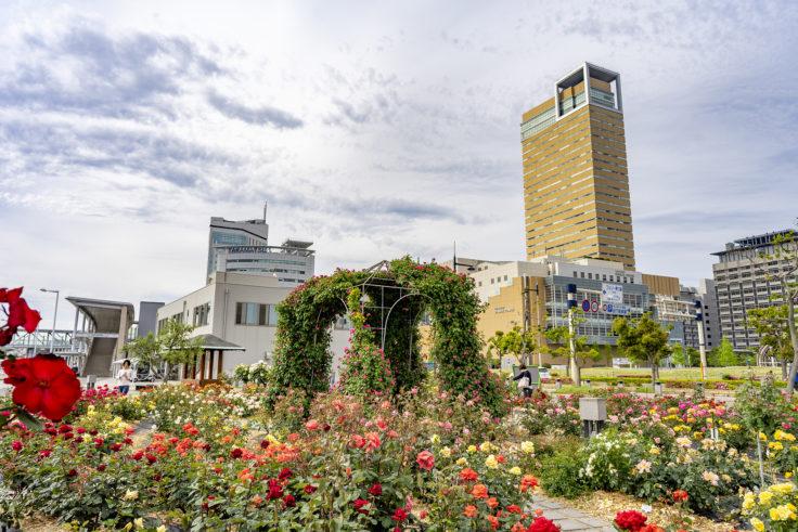 高松シンボルタワーとバラ園