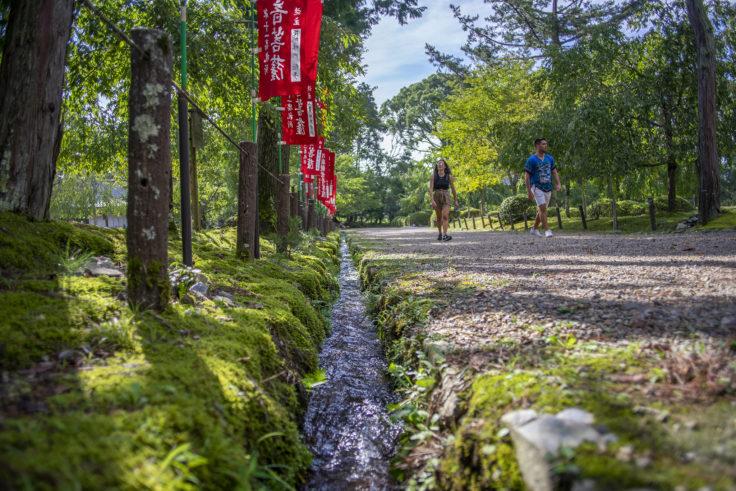 醍醐寺の緑3