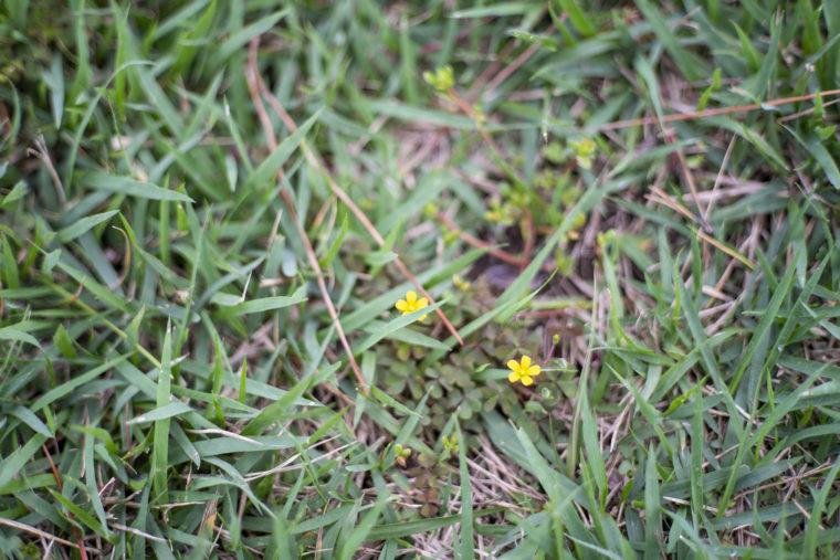 ウチノ海総合公園の小花