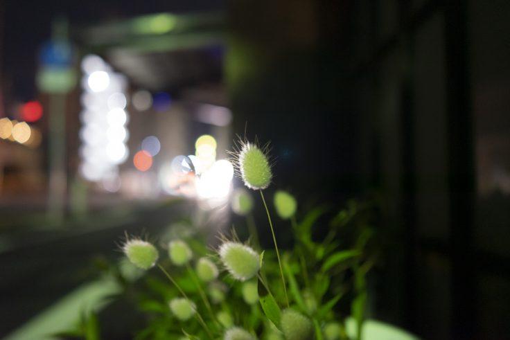 夜のラグラス