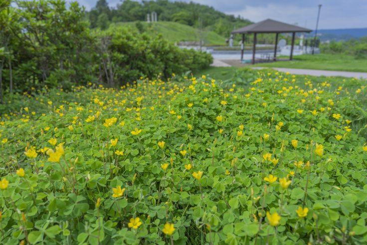 あじ竜王山公園の景色4