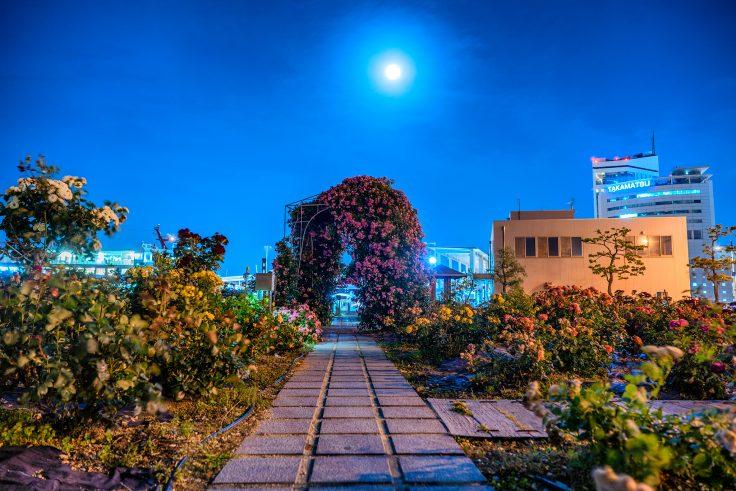 夜のサンポート高松バラ園