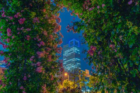 夜のサンポート高松バラ園と高松シンボルタワー