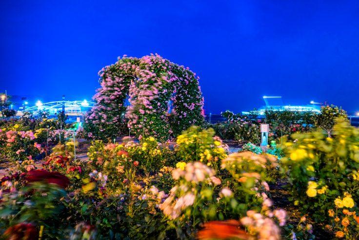 夜のサンポート高松バラ園3
