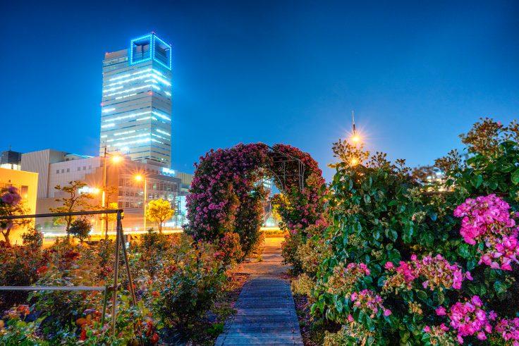 夜のサンポート高松バラ園6
