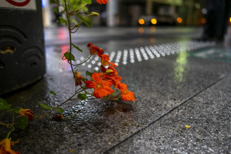 夜の雨に濡れるキンレンカ