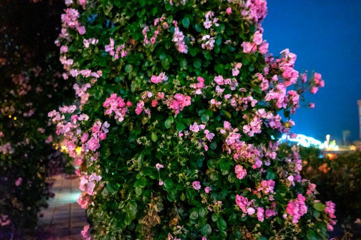 夜のサンポート高松バラ園7