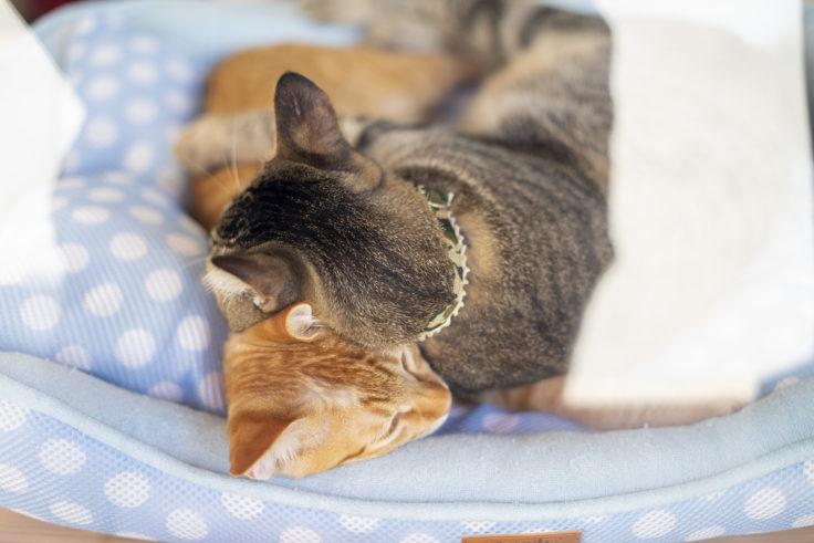さかな市の猫「うり」と「こなつ」