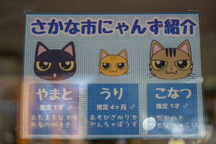 さかな市の3匹の猫