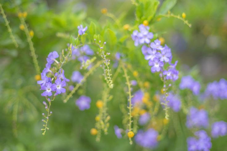 津田に咲いていた花