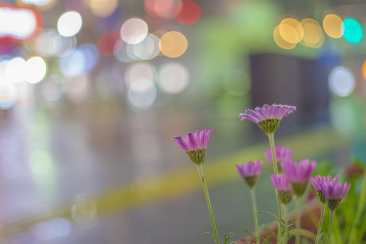 夜の雨と花の玉ボケ