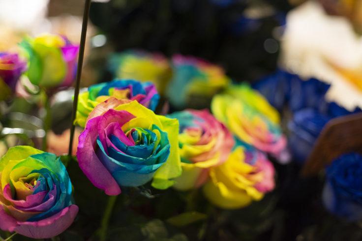 レインボーのバラ