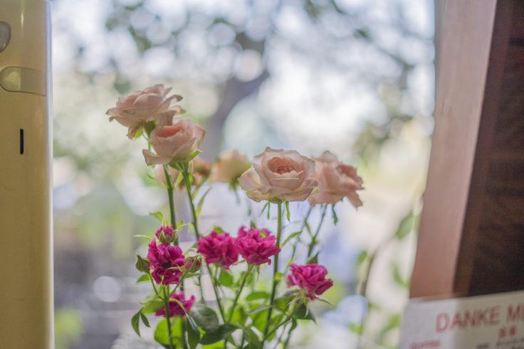 ダンケのバラ