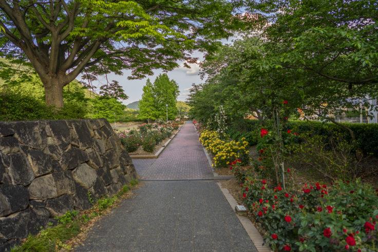 亀水ばら園4