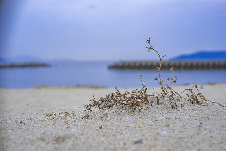 庵治の海岸