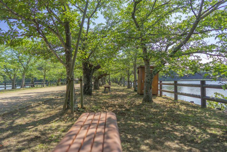 亀鶴公園桜並木