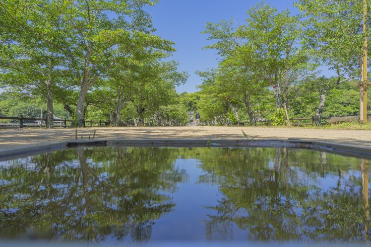 亀鶴公園桜並木2