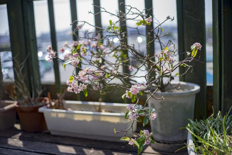 チューリップハウスの花