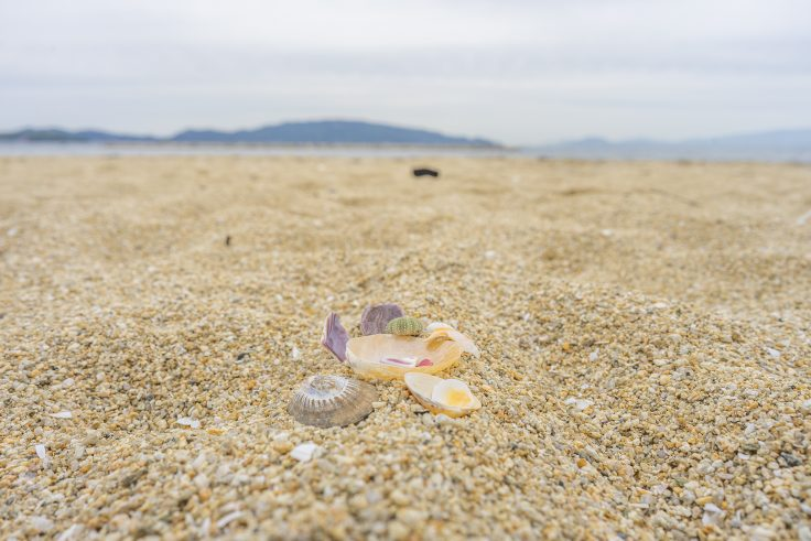山田海岸でビーチコーミング