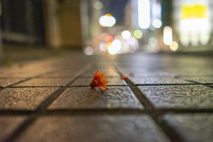 落ちたザクロの花