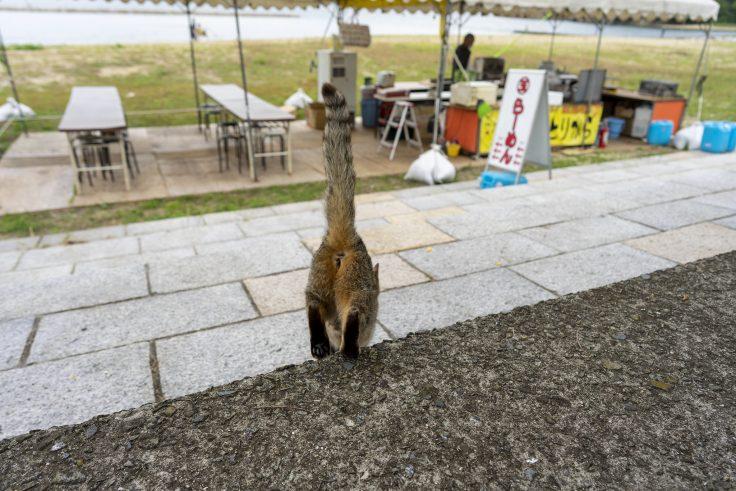 山田海岸の猫2