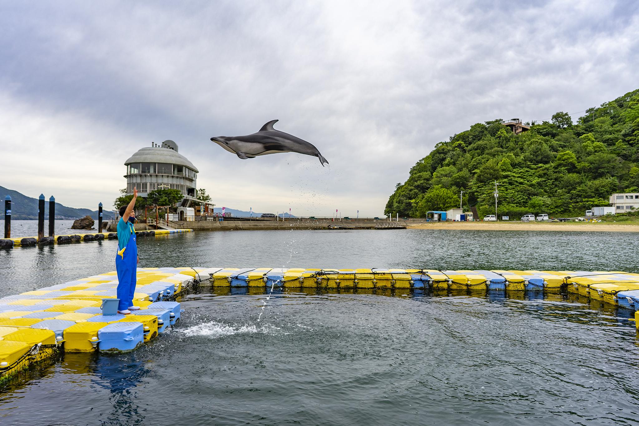 日本ドルフィンセンターでイルカのエサやり体験をしてきた。