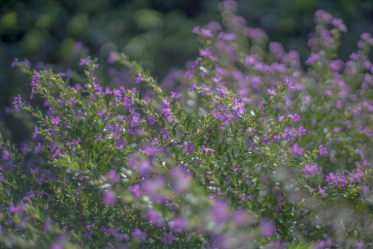 徳島中央公園の花