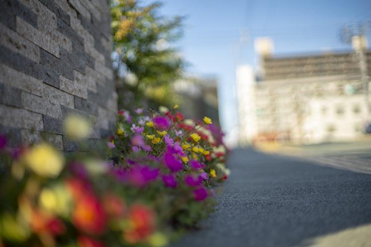 徳島中央公園外部の花
