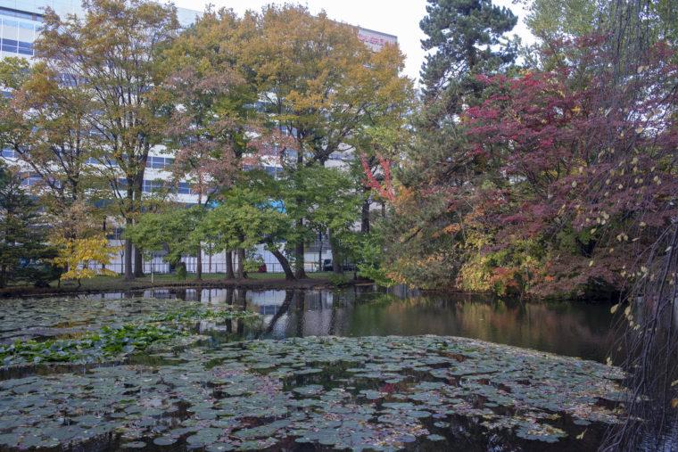 赤れんが庁舎 (北海道庁旧本庁舎)の池
