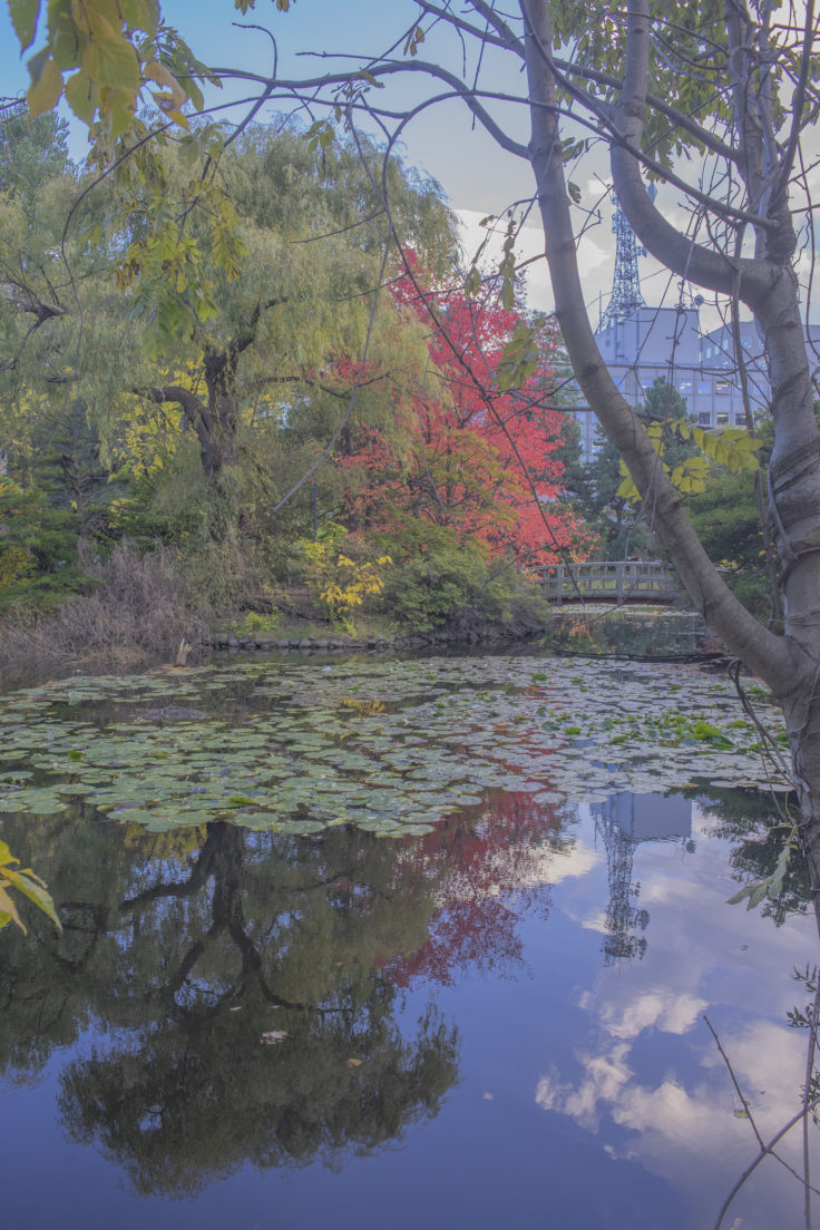 赤れんが庁舎 (北海道庁旧本庁舎)の池2