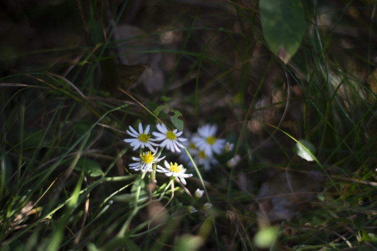 五色台の白い花