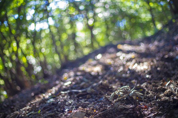 五色台の野鳥の森
