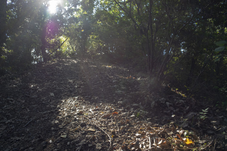 太古の森展望台へ
