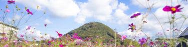 白山とコスモス