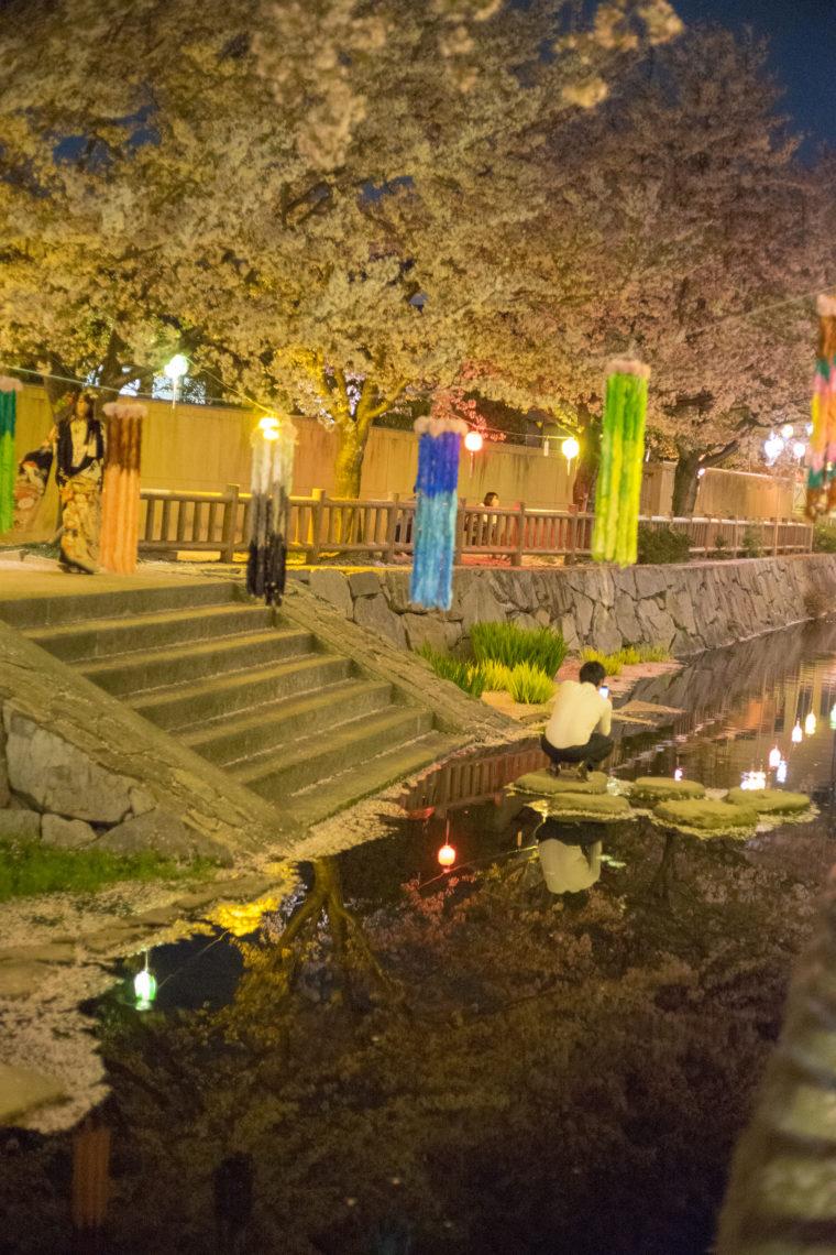 鹿の井出水夜桜インスタ映え