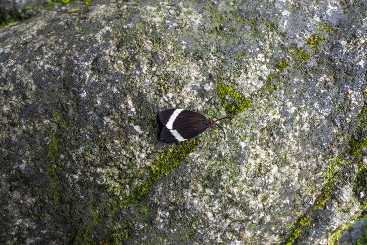 不動の滝にいた蛾