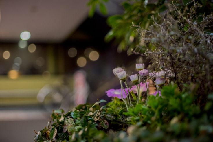夜の花と玉ボケ
