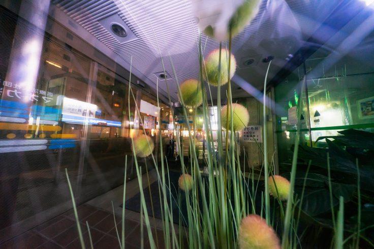 超広角レンズで撮る花2