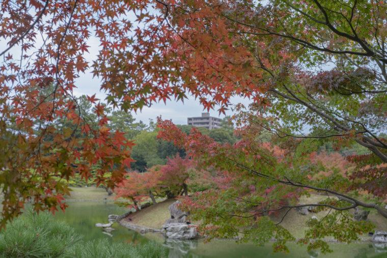 栗林公園の楓岸紅葉