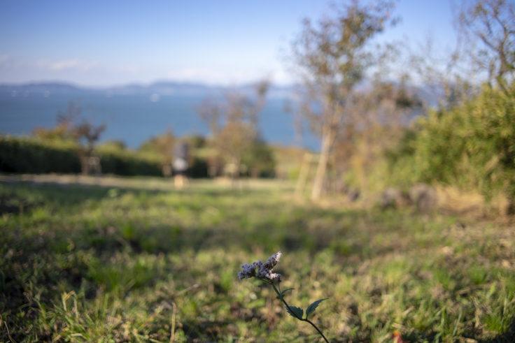 大串自然公園のヒヨドリバナ