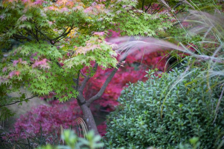 栗林公園の紅葉5